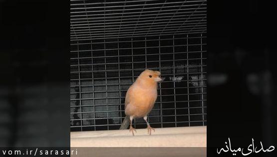 شباهت عجیب این پرنده به دونالد ترامپ +تصویر