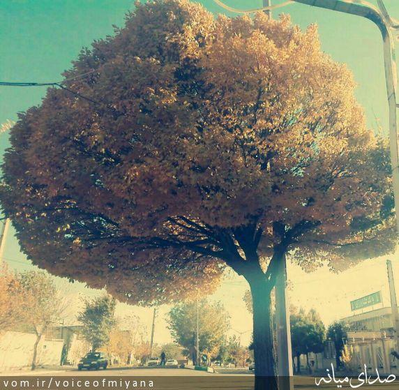 پاییز ترکمانچای