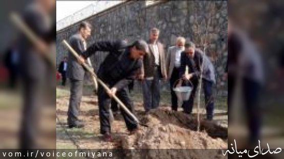 توزیع 24 هزار اصله نهال در شهرستان میانه