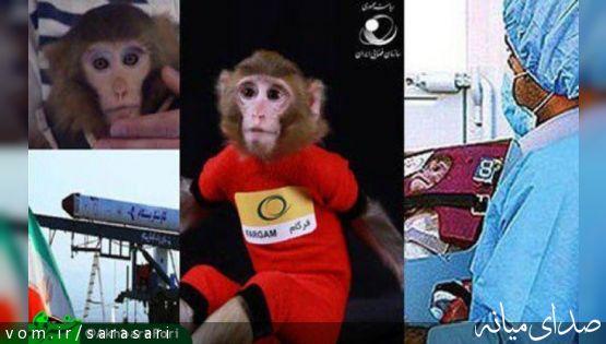 میمونهای فضائی ایران بچه دار شدند +تصویر