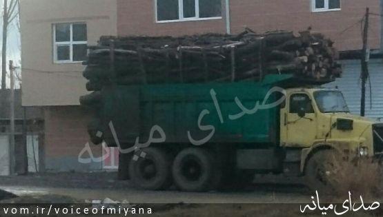 فروش درختان شهرستان میانه به چوب بری های شمال !