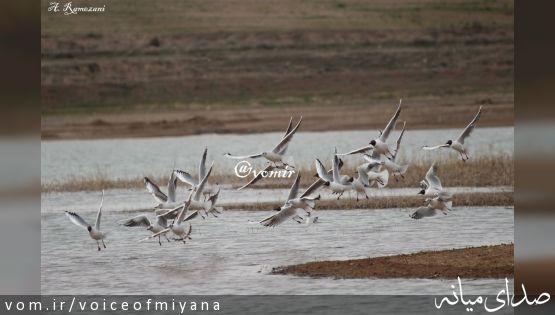 آشنایی با گیاهان و پرندگان میانه +تصاویر