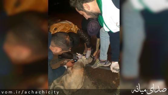 واکسیناسیون و وصل پلاک به سگ های دامداران شهر آچاچی انجام شد